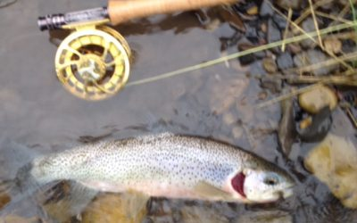 Links: References to westslope cutthroat trout (WCT) deformities in the Elk River